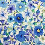 Petunias - Delft by The Kaffe Fassett Collective Petunias - OzQuilts