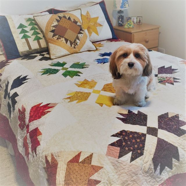 Quiltsmart Bear Paw & Maple Leaf Printed Interfacing Panels by Quiltsmart - Quiltsmart Kits